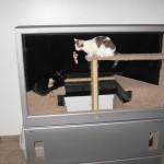 60インチのテレビ、猫ハウスに生まれ変わる