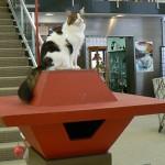 フランク・ロイド・ライト設計の猫ハウス、威風堂々と博物館に鎮座