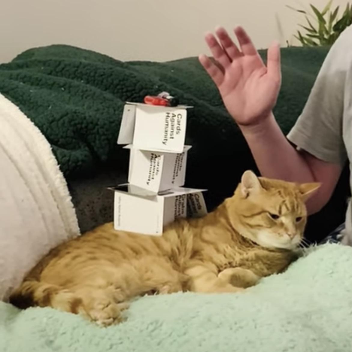 飼い主の不要不急の行動に、猫は付き合う半分寝ながら