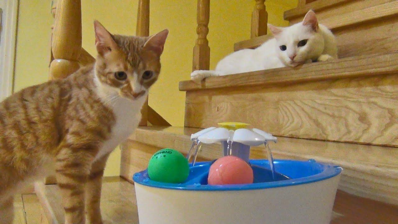 ガジェットに前のめる猫と様子見の猫、猫のマーケもイノベーター理論で
