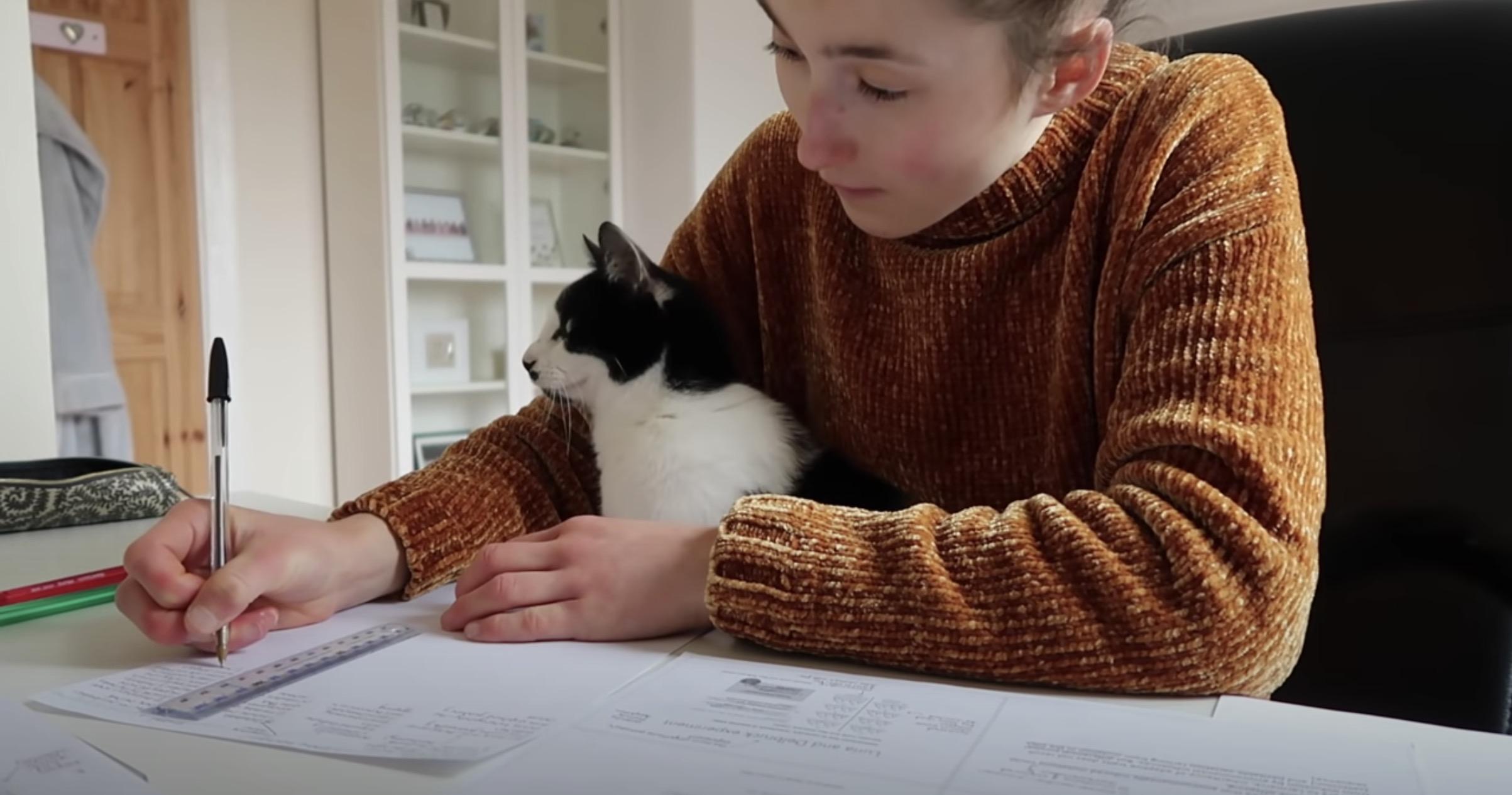 猫と暮らす自宅で2時間勉強したら、ほぼフルタイム猫と密着