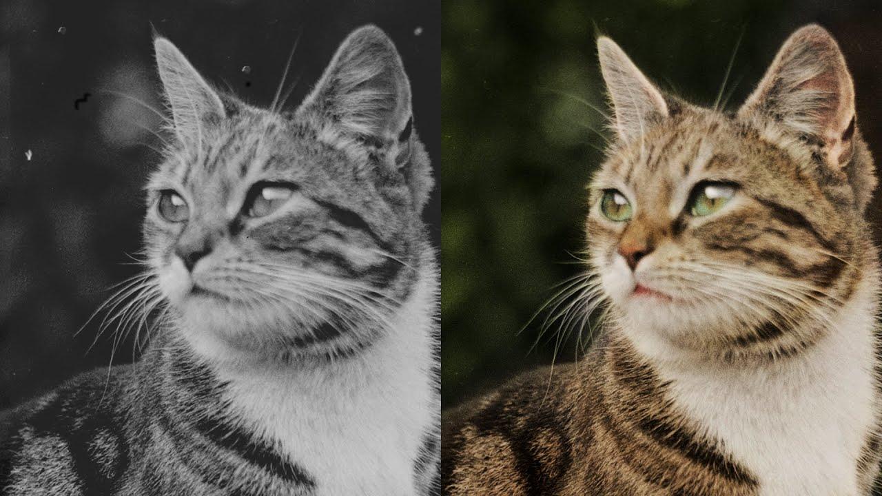 1900年頃のガラス乾板から、美しき猫の姿と彩りを職人技で見事再現