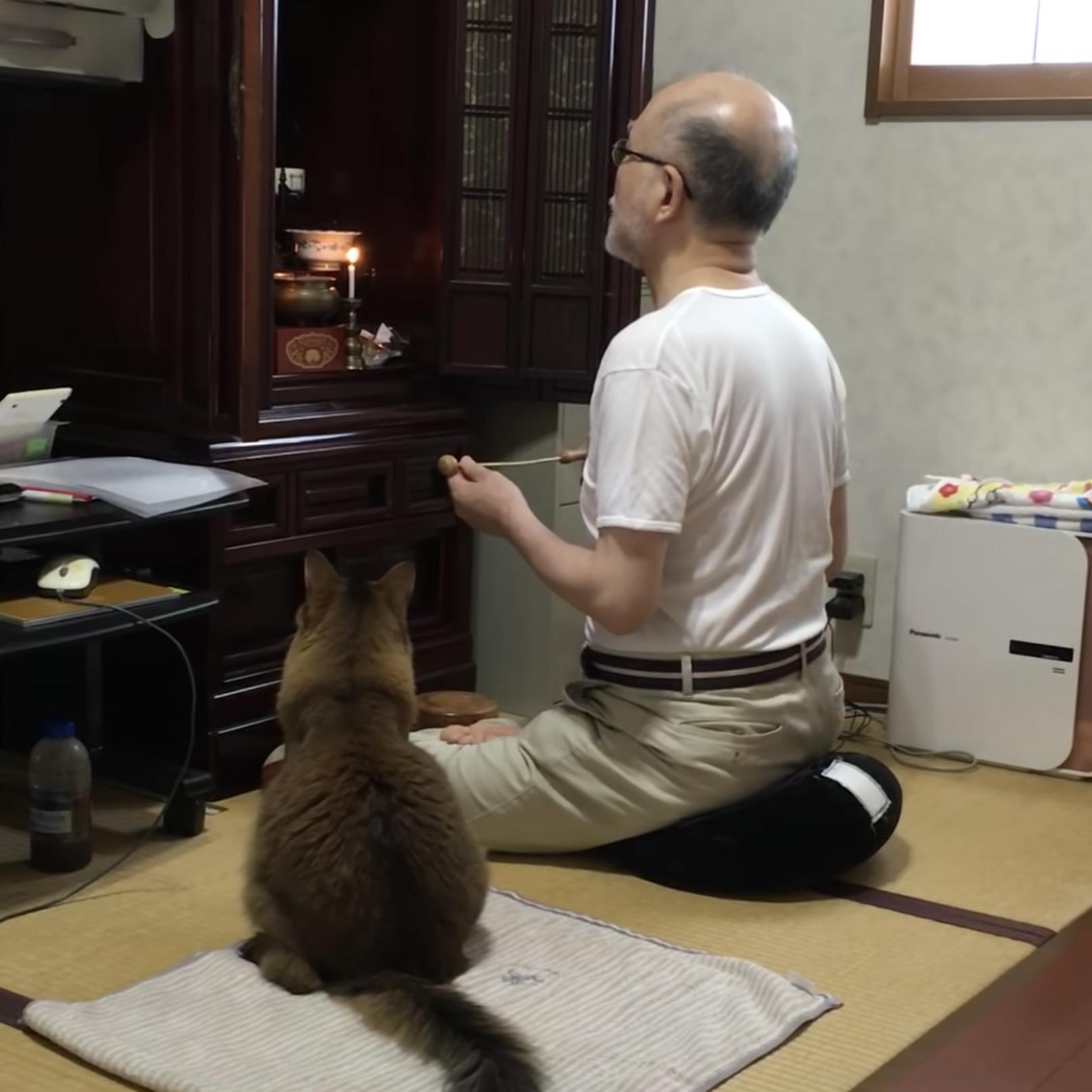 仏壇に耳を向けつつお経を聞く猫、猫背伸ばして座布団に座す