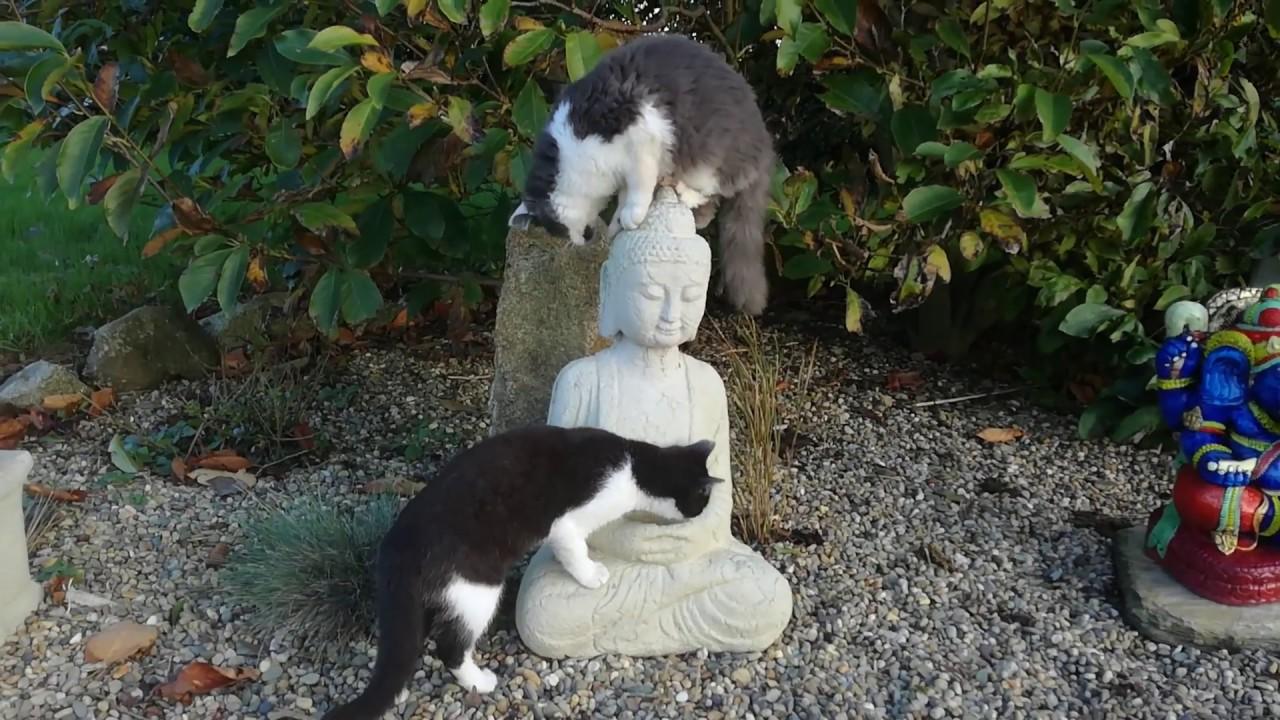 釈迦如来の石像に遊ぶ2匹の猫、頭上の螺髪争奪戦に