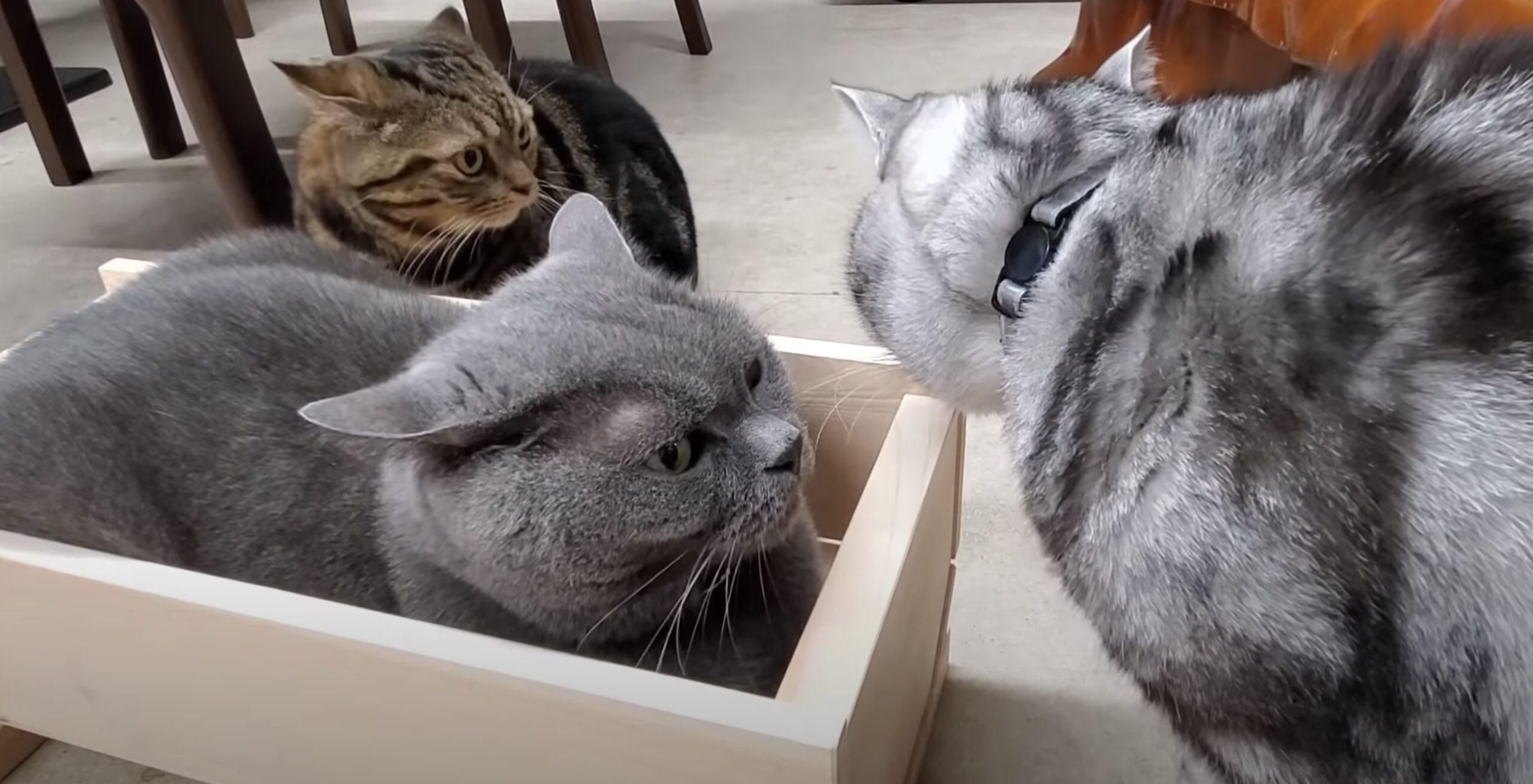 白木造りの高級ヒノキの猫ベッド、入居希望者続々集まる